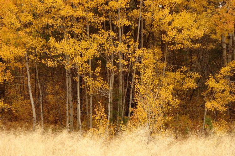 Example of the Aspen Woodlands Strategy Habitat, within Fremont-Winema National Forest, Oregon