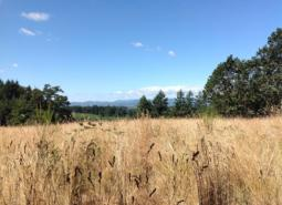 """There are several ongoing conservation efforts within the Dundee Oaks COA. In 2013, the Confederated Tribes of Warm Springs acquired this 277-acre """"Red Hills Conservation Area"""", through the Willamette Wildlife Mitigation Program."""