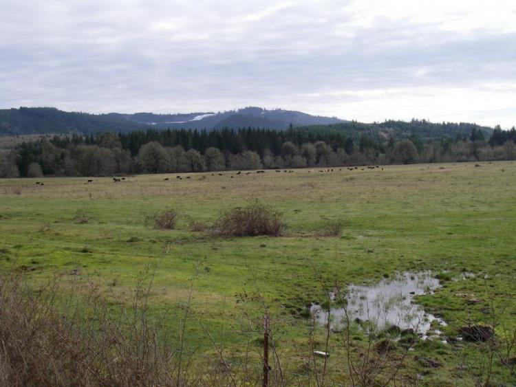Luckiamute River Area