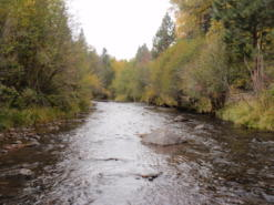 The Whychus Creek in Oregon's East Cascade Ecoregion.