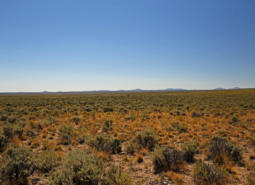 Sagebrush steppe habitat in the Northern Basin and Range ecoregion.