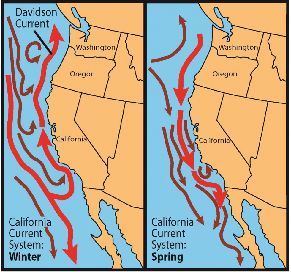 Seasonal variation in the California Current System