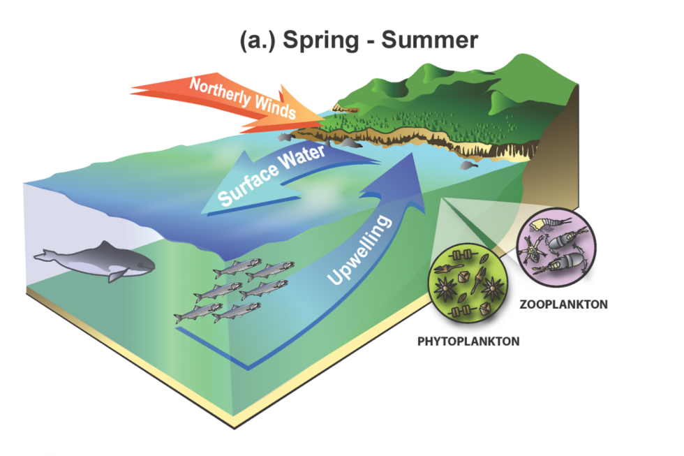 Spring-summer upwelling