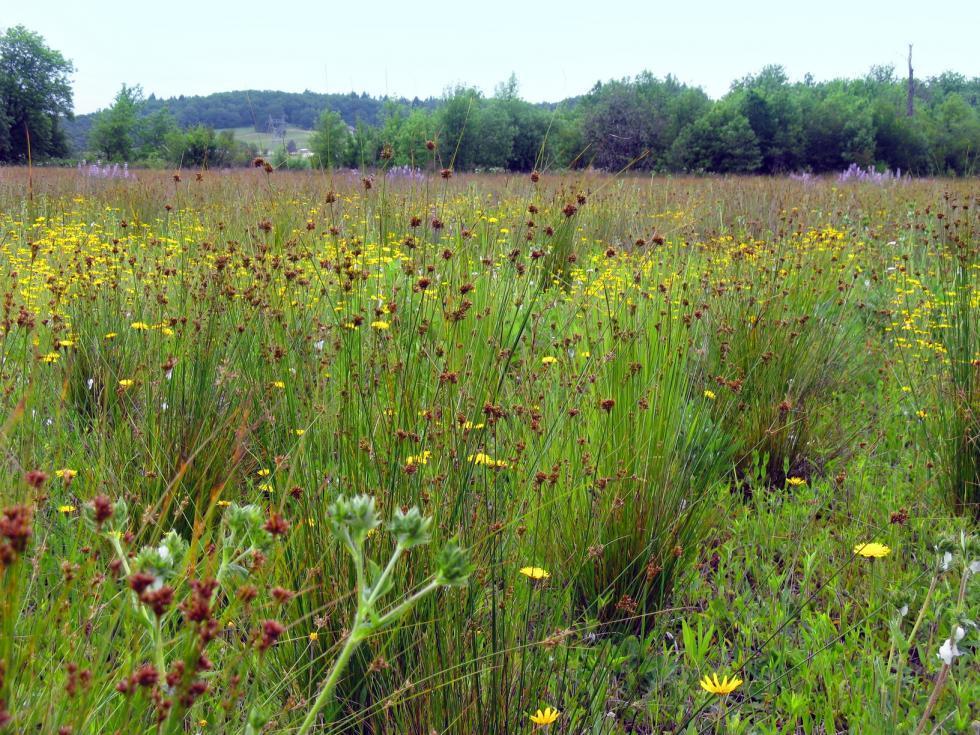 Grasslands Oregon Conservation Strategy