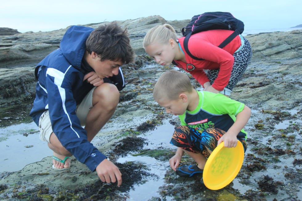 Kids exploring a tide pool.