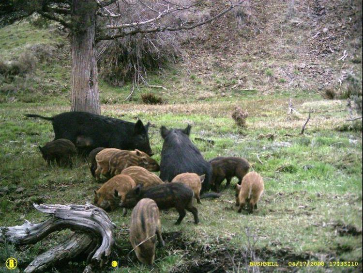 Invasive Species Oregon Conservation Strategy