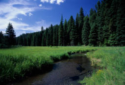 The Middle Fork John Day River in Oregon's Blue Mountain Ecoregion.