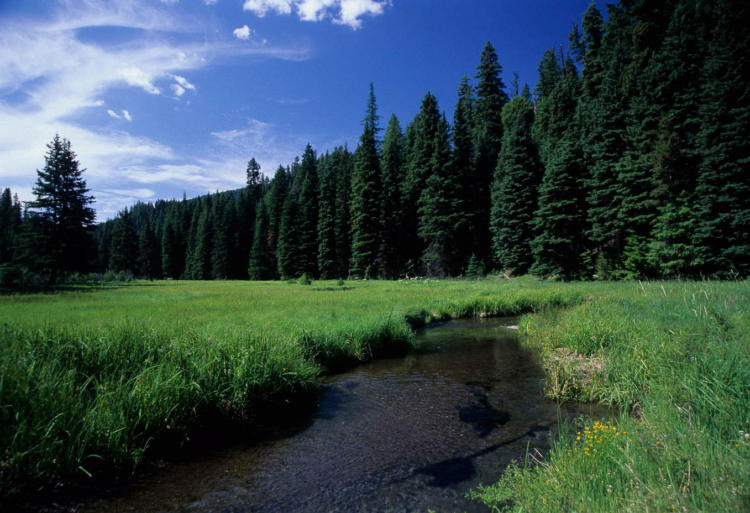 A narrow, slow river runs through a green, grassy field with a forest in the background on a sunny day