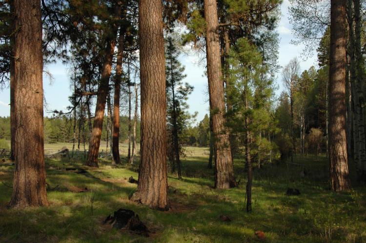 Disruption Of Disturbance Regimes Oregon Conservation Strategy - Fire regime map us west coast