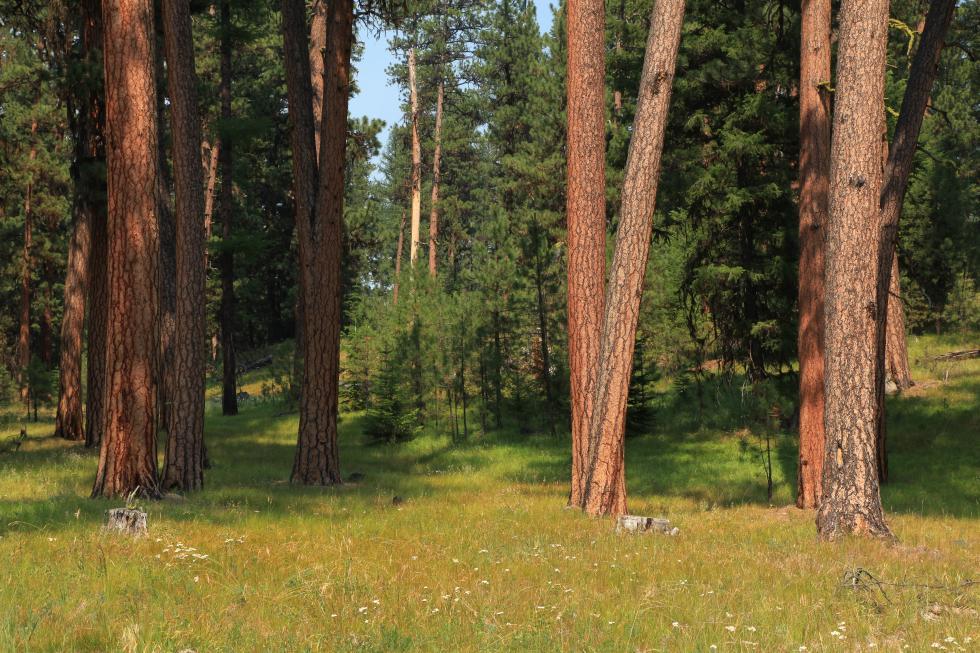 Ponderosa Pine Woodlands - Oregon Conservation Strategy