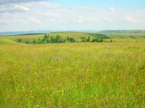 The Zumwalt Prairie in the Blue Mountains Ecoregion.