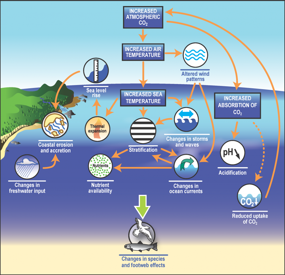 Effects of increased atmospheric carbon dioxide on global oceans